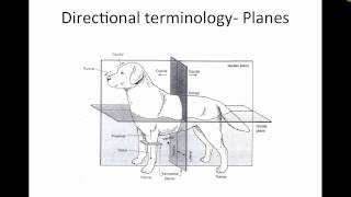 Skeletal Anatomy of Dogs and Cats  [Part 1 of 2] (VETERINARY TECHNICIAN EDUCATIONAL VIDEO)