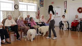 Dog with Degenerative Myelopathy who had a spinal stroke resuming therapy dog work