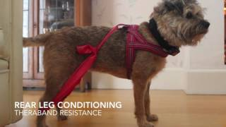 Exercises for dogs with joint issues